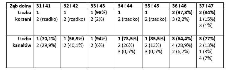 Ilość kanałów w zębach dolnych (w %)